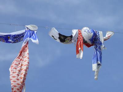 芥川桜堤公園の上空を泳ぐ約1000匹のこいのぼり 絡まった鯉のぼり