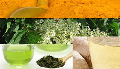 Tanaman herbal obat asam urat
