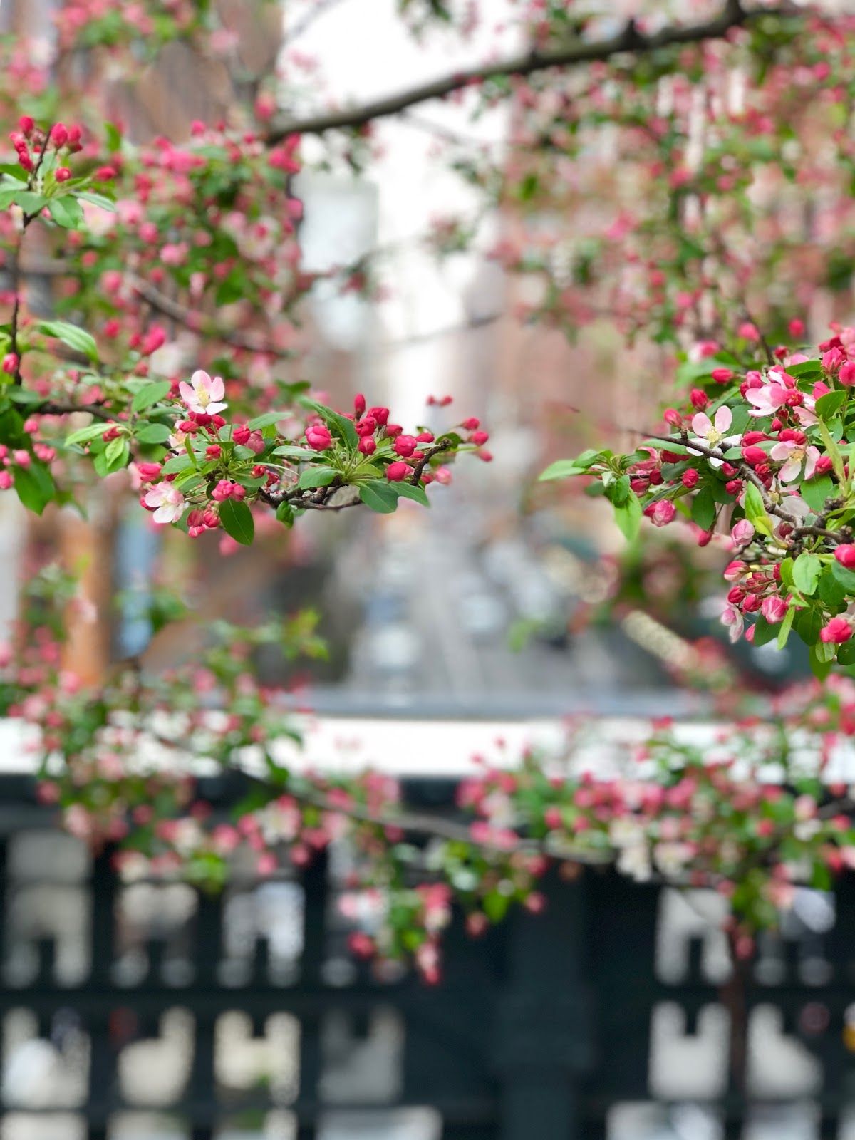 The High Line, Spring 2018, New York City, Photos by Jessica Marie Kelley