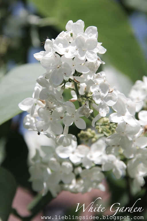 lieblingsidee White Garden