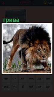 651 слов стоит лев с великолепной гривой 7 уровень