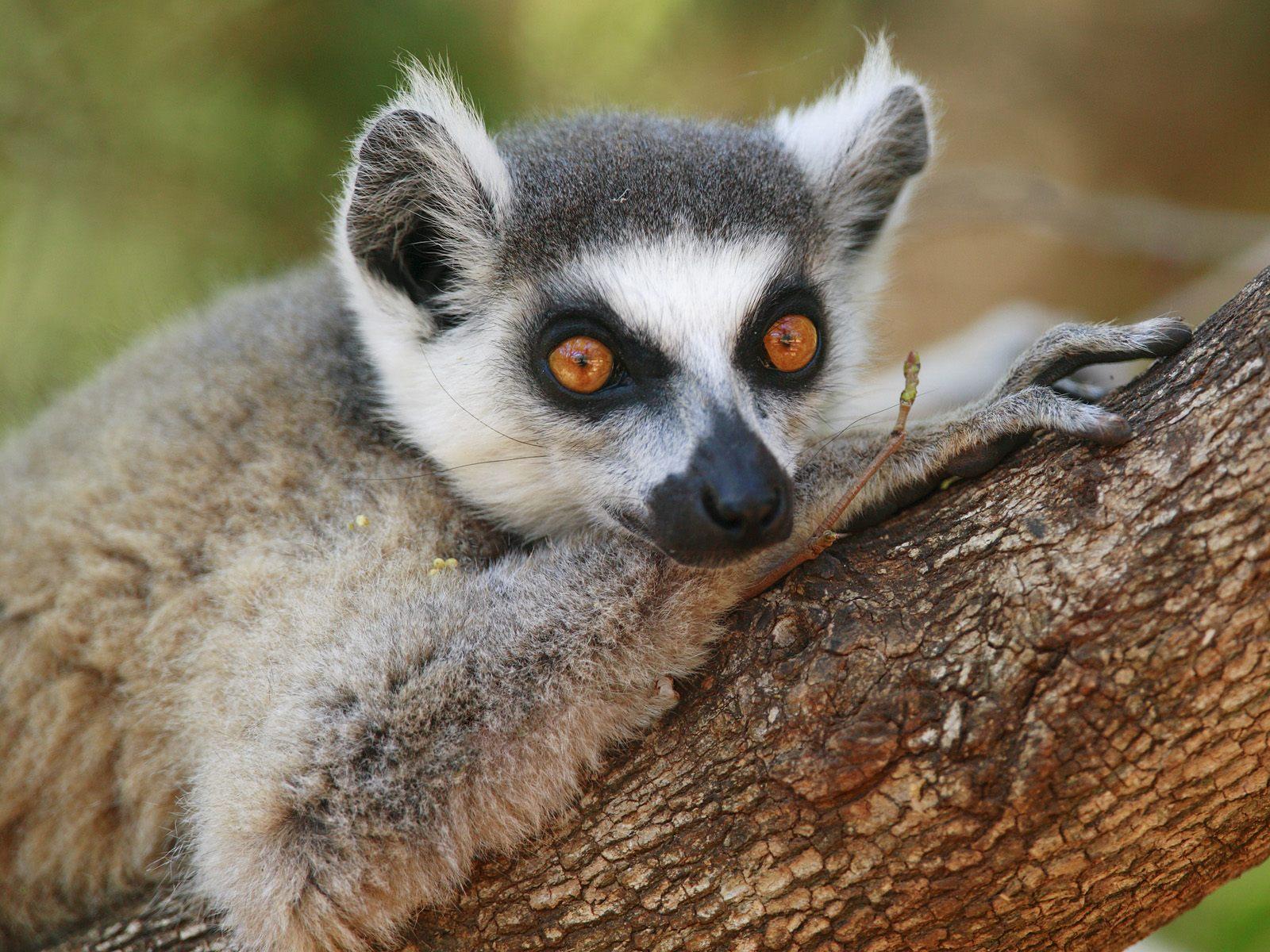 Animals In Their Natural Habitat Ii