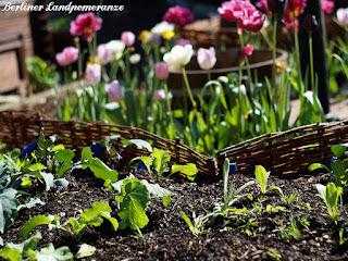 Blühpflanzen im Gemüsegarten