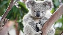 Help Australia's Wildlife by Becoming a Wildlife Warrior
