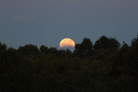 Harvest moon 2014