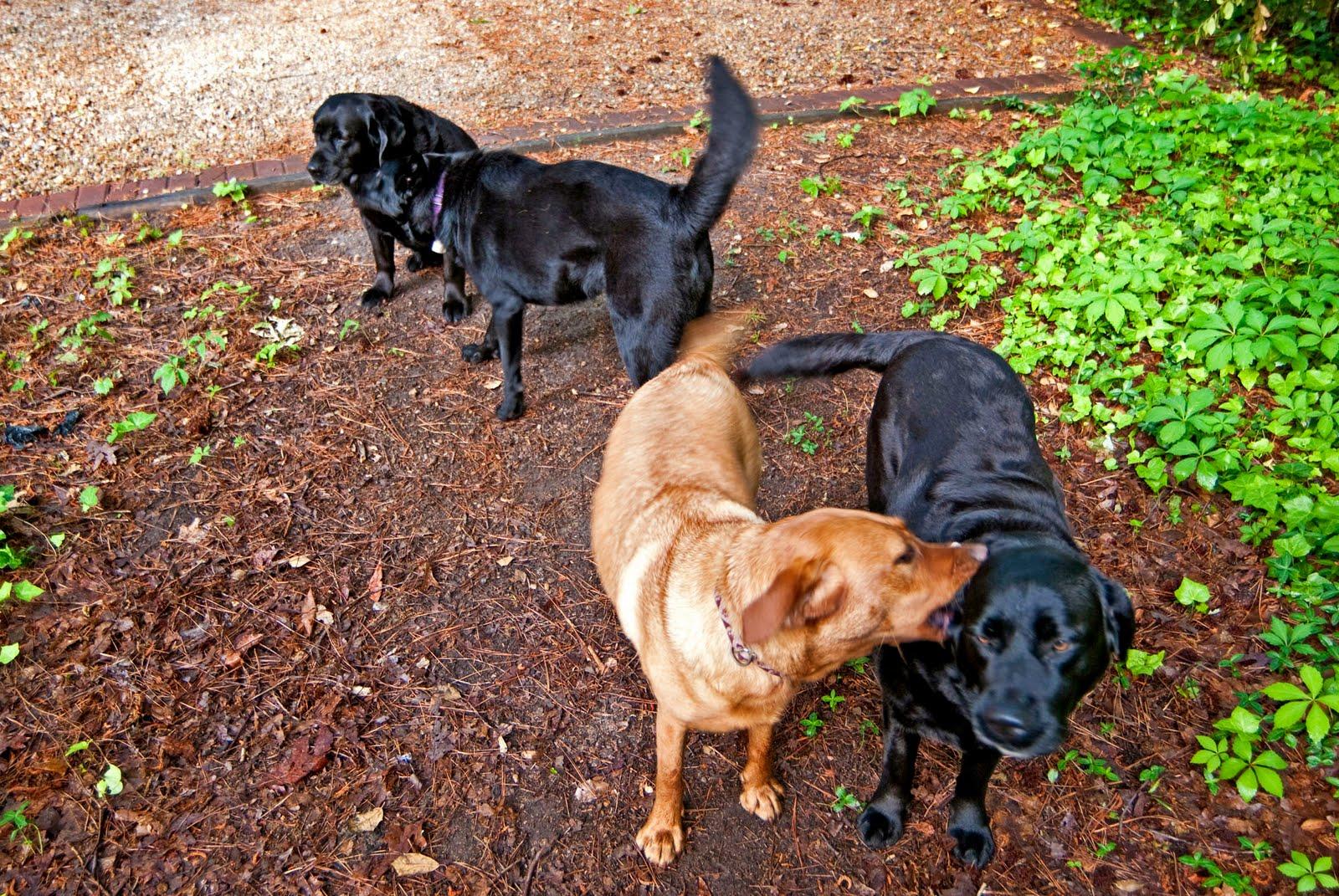 dog photo road - photo #3