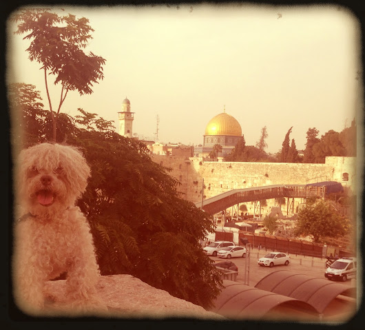 Lost in Jerusalem
