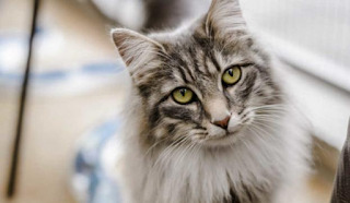 Συλλήψεις για την ανάρτηση με τις οδηγίες για φόλες σε γάτες στα Social Media
