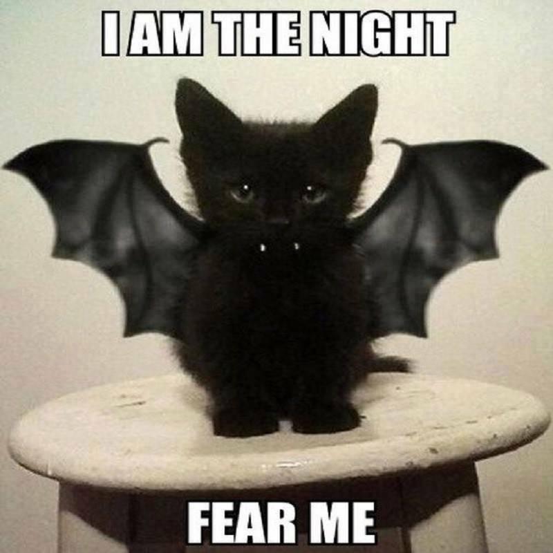 Beautiful Life of Mine: I Am the night black cat bat kitten