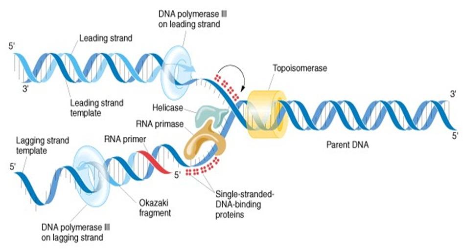 Reseptor terhubung protein G