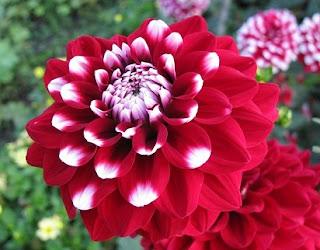 nama bunga dan artinya,nama nama bunga latin,bunga terindah di dunia dan maknanya,15 bunga terindah di dunia,daftar nama bunga,nama bunga langka,bunga terindah sepanjang masa,cara menggambar bunga,