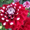 Macam-Macam Nama Bunga Terindah di Dunia