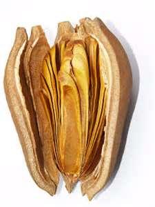 馬來西亞保健茶王: Swietenia Mahogany(Sky Fruit-Buah Tunjuk Langgit)向天果