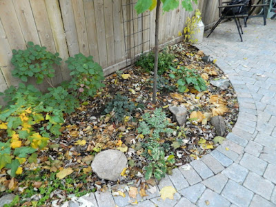 Cabbagetown garden makeover before Paul Jung Gardening Services Toronto