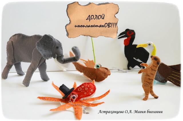 magija-biologii-palchikovyj-teatr-slon-kafrskij-voron-surikat-ilistyj-prygun-osminog-albatros