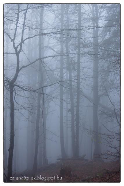 Ködös erdő Pádison a Bihar-hegységben