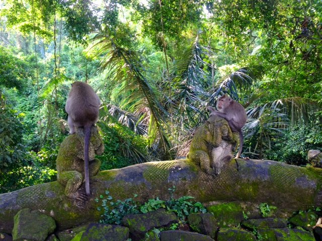 two monkeys in a sacred forest Ubud, Bali, Indonesia