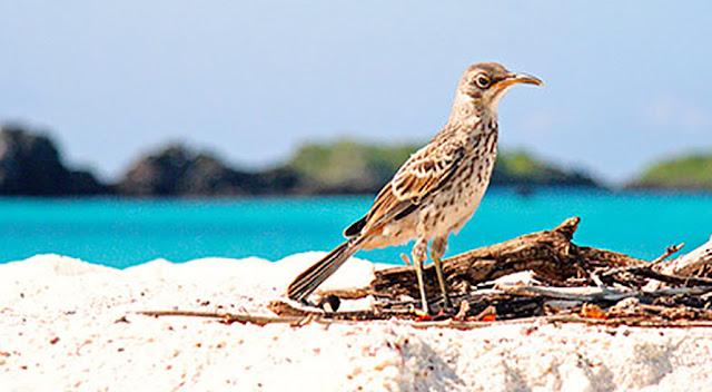 Islote Mosquera of Galapagos
