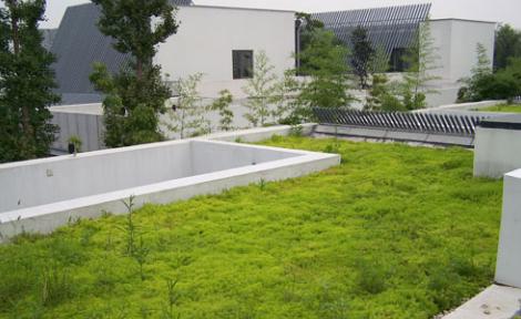 屋頂綠化重要的防護-抗根塗料 ~ 永久性防水.結構補強.壁癌根治專家-綠科技防水工程