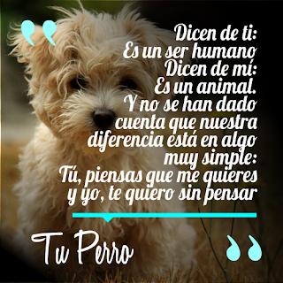 Resultado de imagen de dicen de ti es un ser humano dicen de mi es un animal