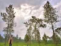Kebun Teh Wonosari Lawang Malang, View hijau Memanjakan Mata