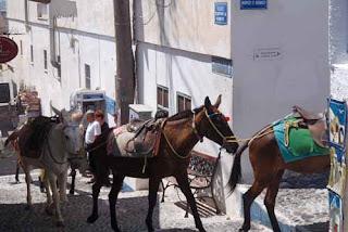Donkey Fira Santorini Greek Island Greece