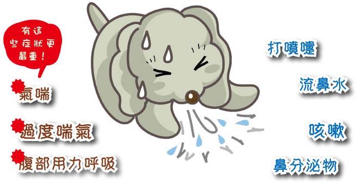 Wonderland of cats and dogs 貓支國 犬支域: 秋咳季,擺脫酷酷嫂/換季時,呼吸道保健 前篇