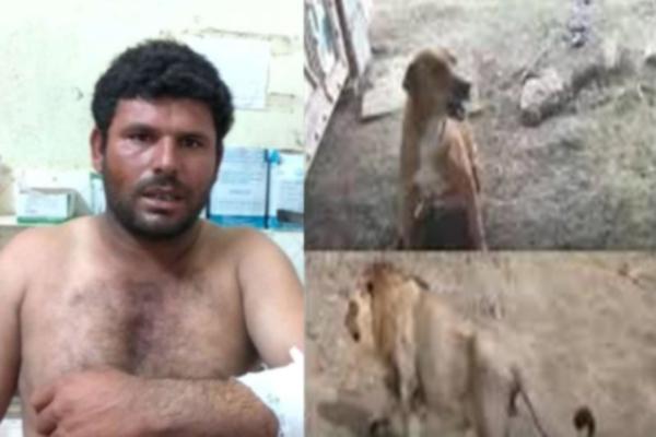 कुत्ते ने शेरों से बचाई मालिक की जान, जानिए दिलचस्प मामला