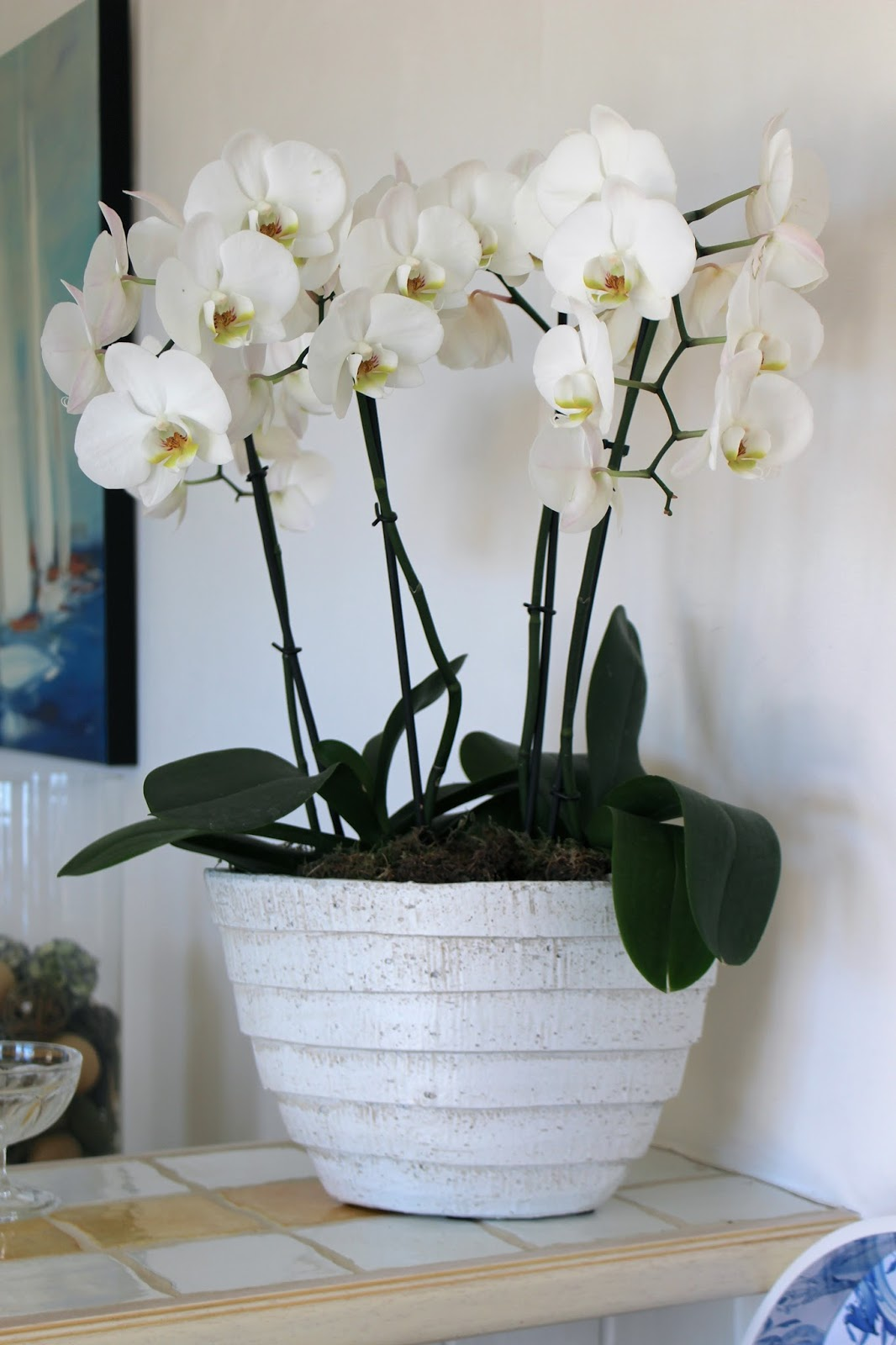 White orchid interior design