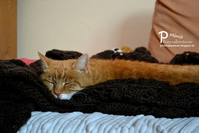 Katze Mimi schlafend auf einer Decke