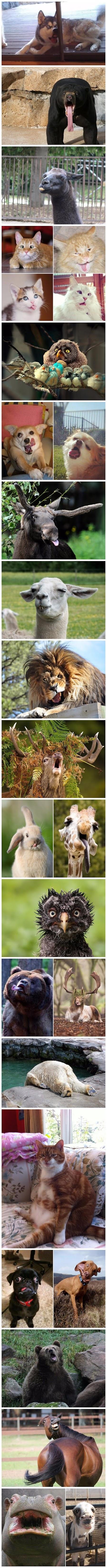 Funny World's Derpiest Animals Joke Picture