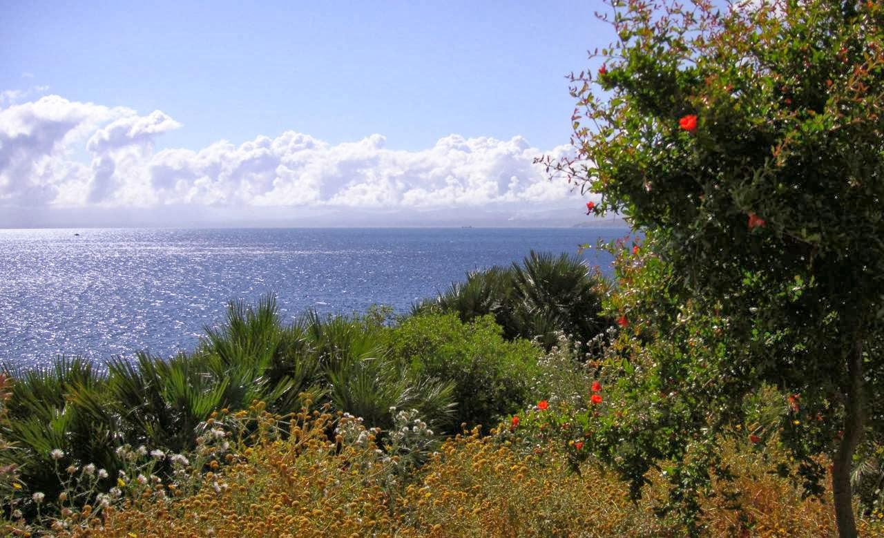 La maquia mediterranea en zonas costeras