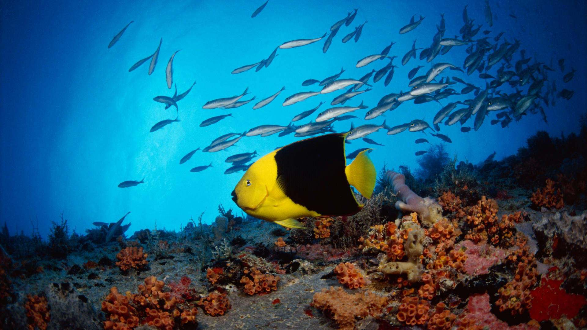 Fish hd wallpapers - Large screen wallpapers free ...