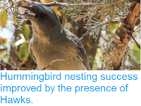 http://sciencythoughts.blogspot.co.uk/2015/09/hummingbird-nesting-success-improved-by.html