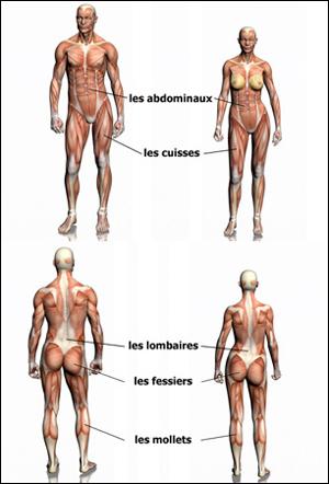 Muscles concernés par le running