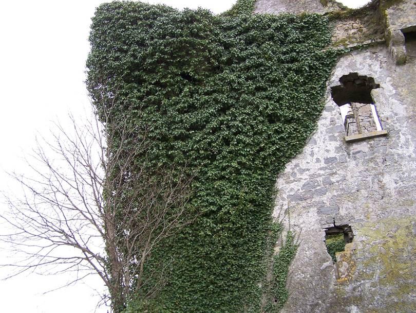 galway ireland pictures, menlo castle history, menlo castle haunted, blake castle, menlo ireland, how big is galway