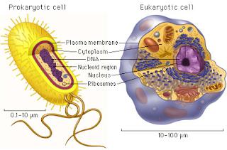 Pengertian dan Perbedaan Sel Prokariotik dan Sel Eukariotik