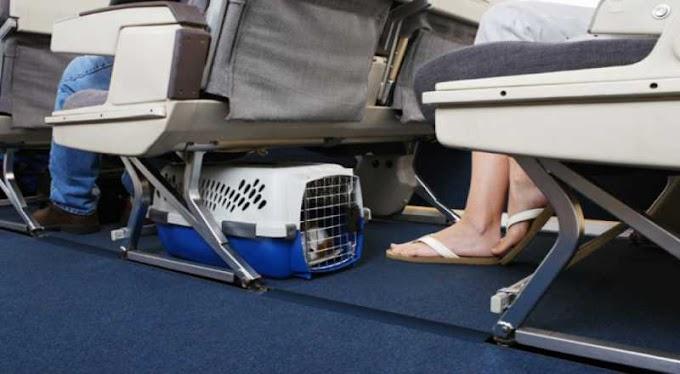 Sancionada lei que assegura transporte de animais em ônibus intermunicipais