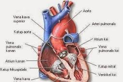 Alat Peredaran Darah