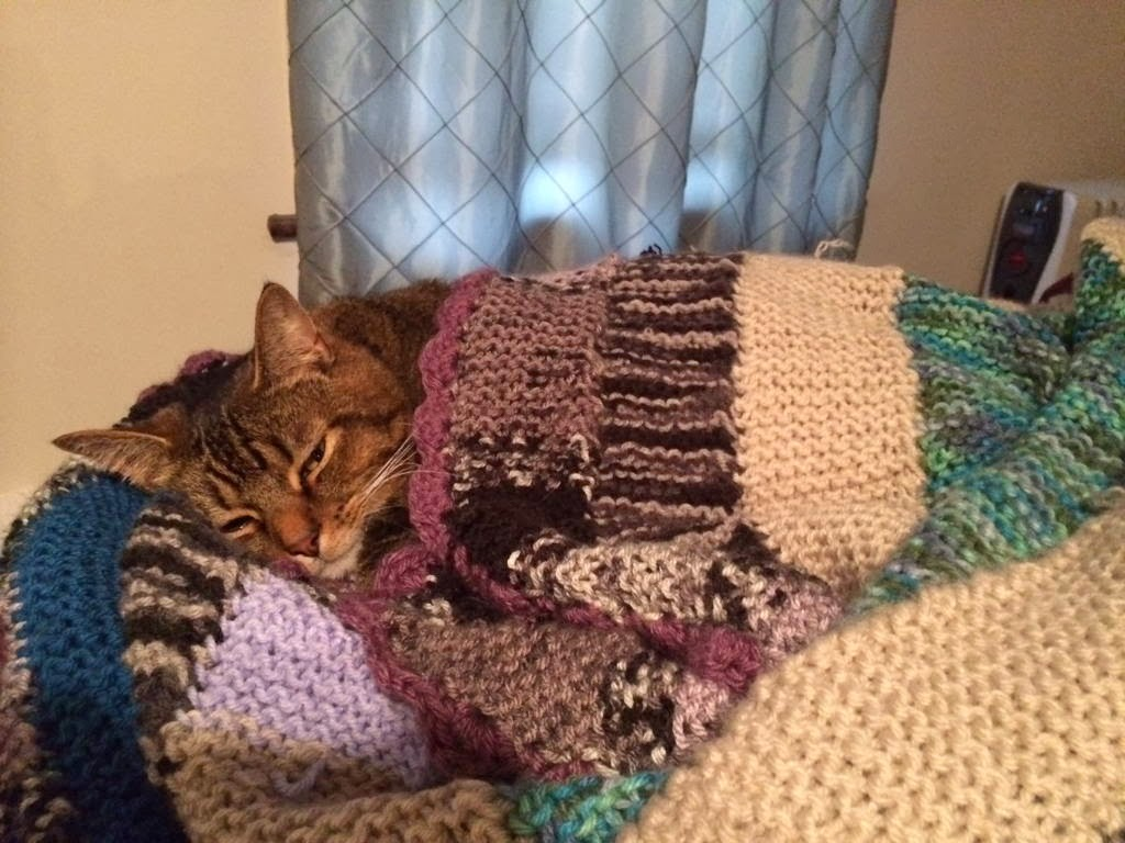 Funny cats - part 87 (40 pics + 10 gifs), cat covers with blanket