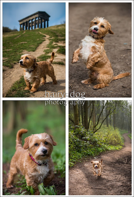 Discount photoshoots in Sunderland, Durham and Newcastle for dogs