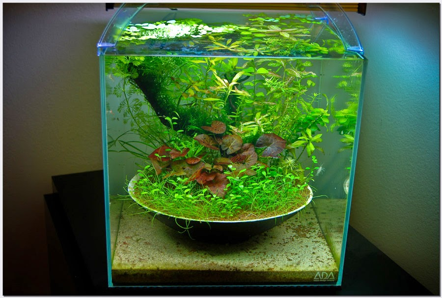 Membuat Filter Aquaspace Aquarium