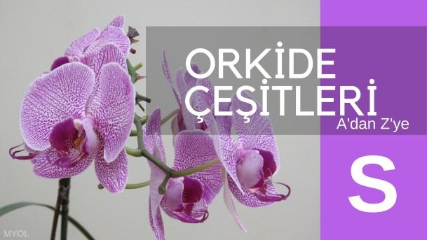 Orkide Çeşitleri S Harfi