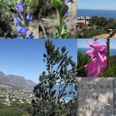 Lion's Head October flowers above the Atlantic
