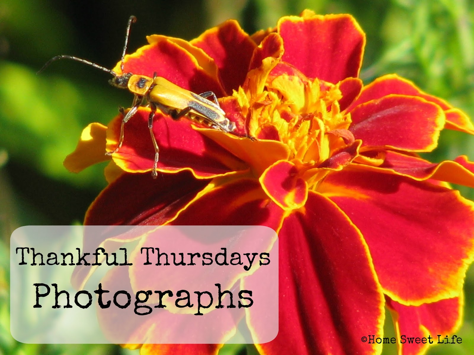 thankfulness, photographs
