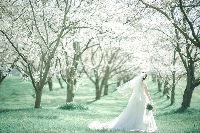 松山市桜のトンネルでブライダル撮影