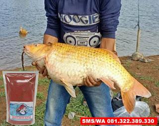 Umpan Ikan Mas Subang Khusus Galatama