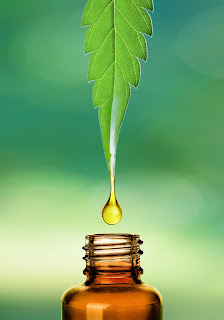 Hemp Leaf Oil dropping into medical bottle