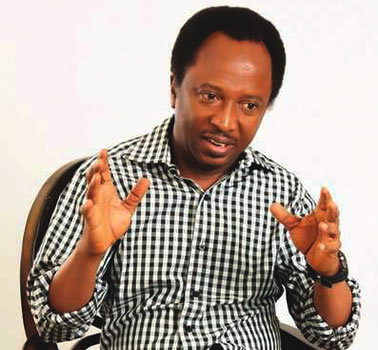 Sen. Shehu Sani Admits That Buhari Doesn't Have An Economic Team