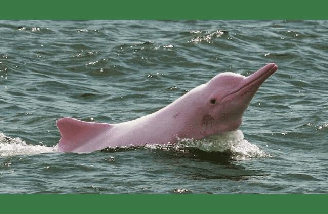 most beautiful sea creatures